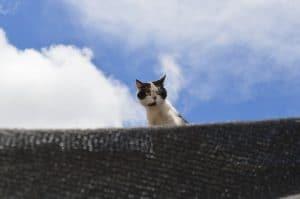 gatito adopción