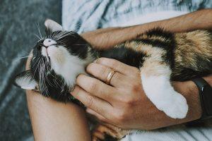 gato adopción