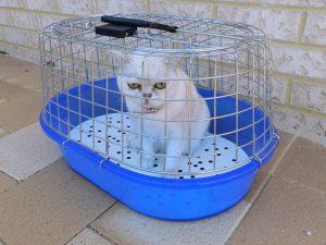 trasportín para gatos de plástico y malla metálica