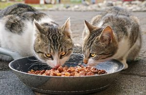 Pienso humedo para gatos