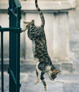 gato cayendo. balcon sin red protectora