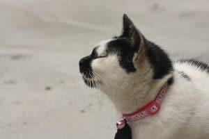 Collar de identificación para gatos con cascabel