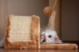 Casa para gatos muebles para gato