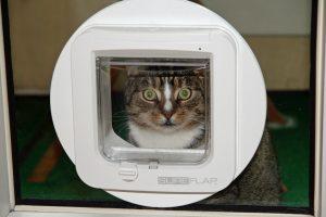 Gatera de cristal para mascotas