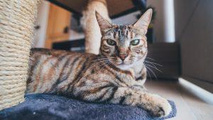 Casa para gato para uso interior