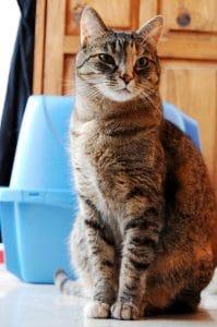Gato con arenero cerrado