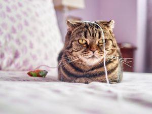 Juguete para gatos