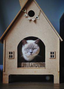 casa para gatos de madera