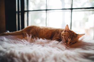 Cama para gato cómoda