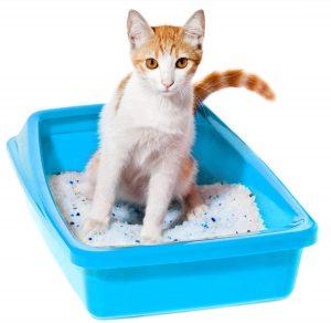 Gato en su arenero con arena de silice
