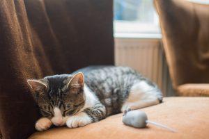 Raton de peluche para gatos