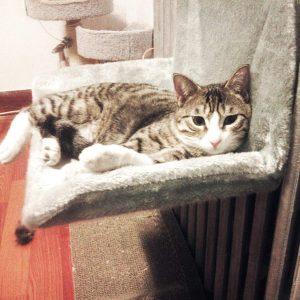 Hamaca de radiador para gatos  Anjing