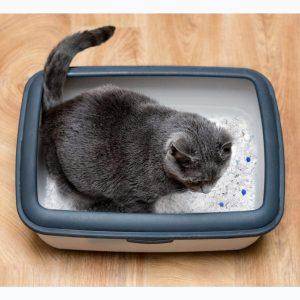 gato en arenero con arena de silice