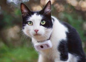 Gato con un GPS de rastreo
